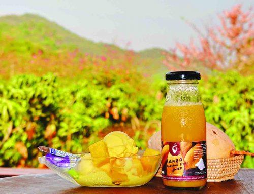 บ้านหมากม่วง (The Mango House Farm)