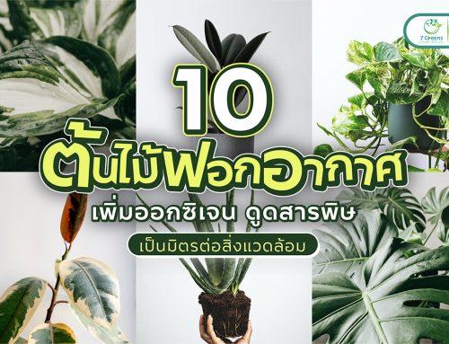 แนะนำ 10 ต้นไม้ฟอกอากาศ เพิ่มออกซิเจน