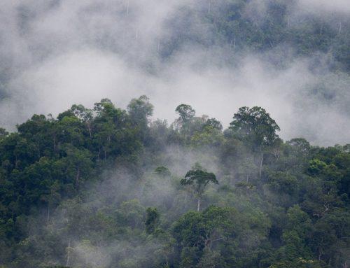 """ข่าวดี! กลุ่มป่าแก่งกระจาน ขึ้นทะเบียนเป็น """"มรดกโลกทางธรรมชาติ"""" แห่งที่ 3 ของไทย"""