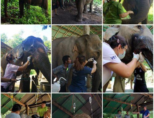 ช้างไทย คนไทย กับภัยโควิด-19